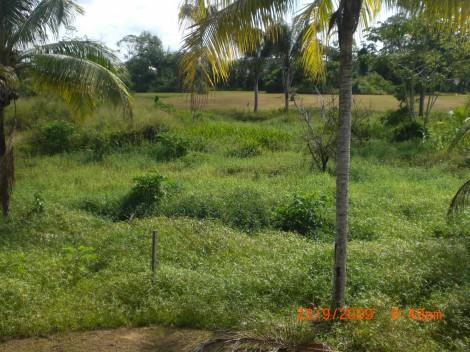Terrain en vente à Matoury  - REF 1289